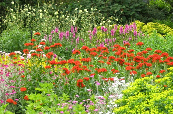 A view of the hot coloured perennials.