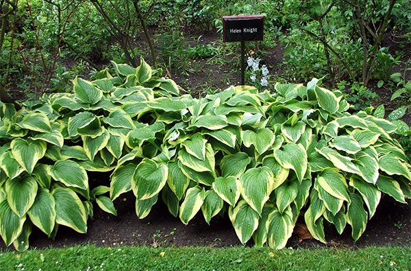 Ha! These hostas are certainly nicely labelled.