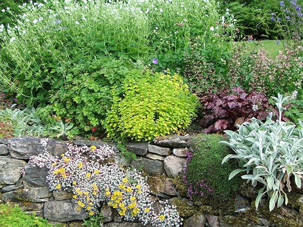 Marjoram and assorted plants looking just great.