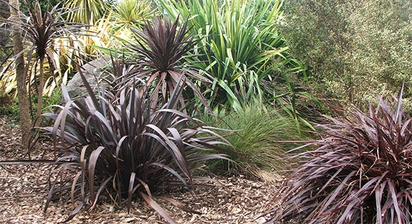 The spiky New Zealand cordylines and flaxes.