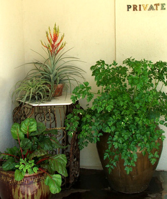 Private pots, full of vegetables and other plants...