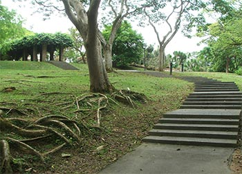 Tree roots and steps.