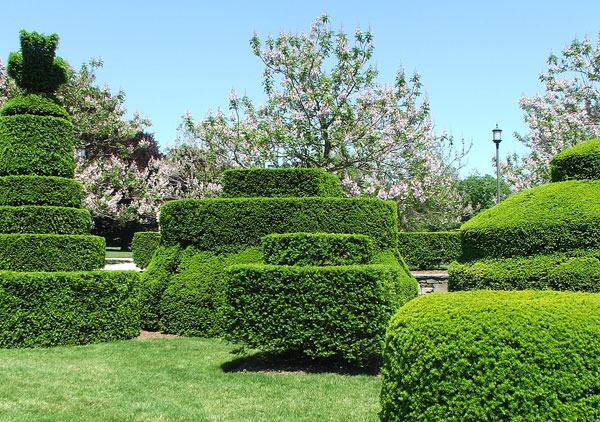 I love these fat shrub shapes!