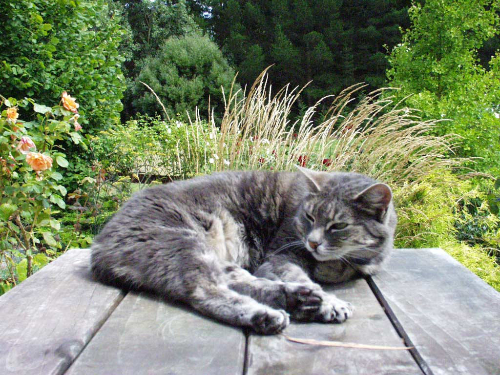 [img width=400]http://www.mooseyscountrygarden.com/cat-dog-pictures/sleeping-cat.jpg[/img]