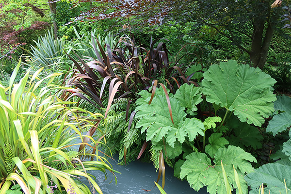 Phormiums and Gunnera