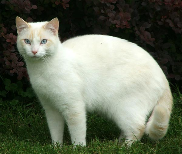 http://www.mooseyscountrygarden.com/cats-dogs/cat-beautiful-white.jpg