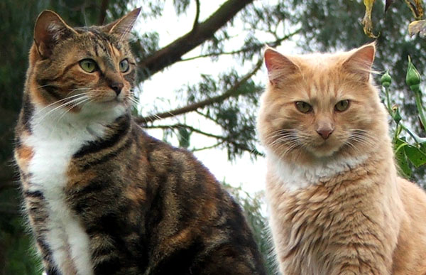 Both these cats have convictions for you-know-what...