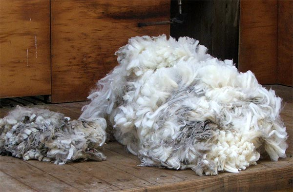how to make wool from sheep