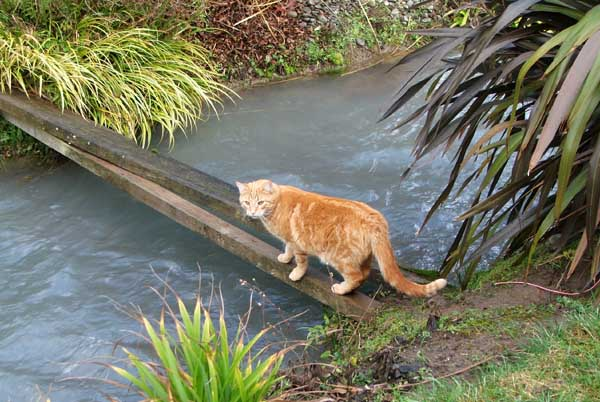 Percy crossing the water race.