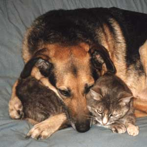 http://www.mooseyscountrygarden.com/cats-dogs/jer_bestfriends.jpg