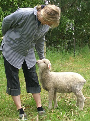 Hee hee. Haru the pet lamb.