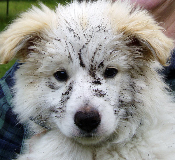 What a grubby puppy face! Rusty has been digging...