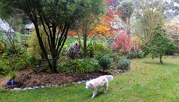 Rusty the dog has wandered into my autumn photograph!