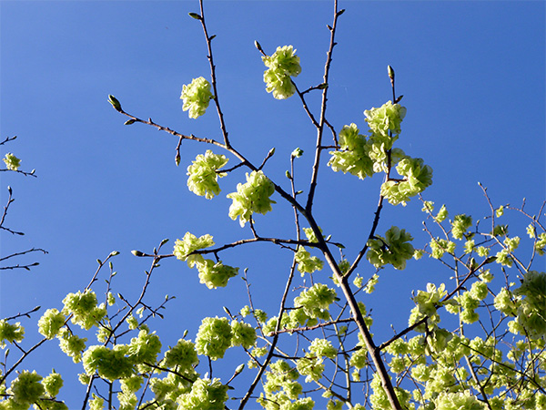 A beautiful sunny sight in spring.