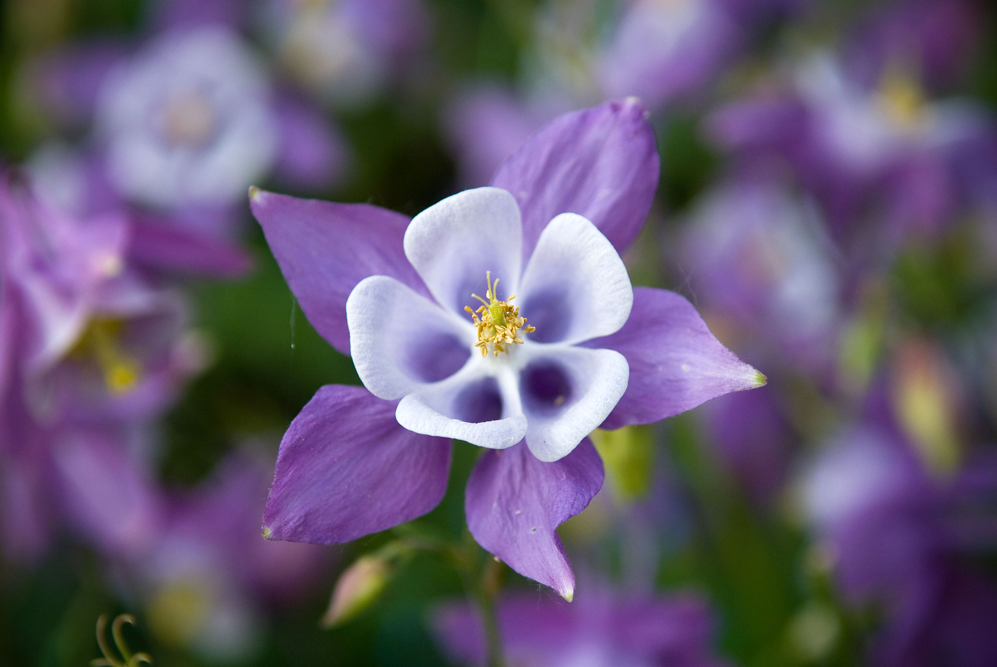 Flower Picture Gallery