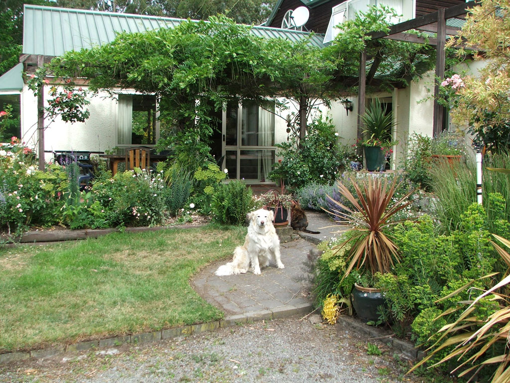 Rusty the moosey dog sits waiting by the house patio gardens you