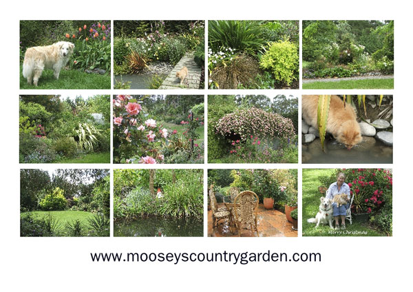 The Moosey Garden looks exceedingly beautiful...