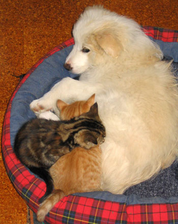 Rusty the puppy with Smoocher and Tiger.