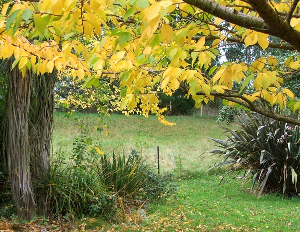 Autumn leaves again - this time on one of the Pond Paddock trees.