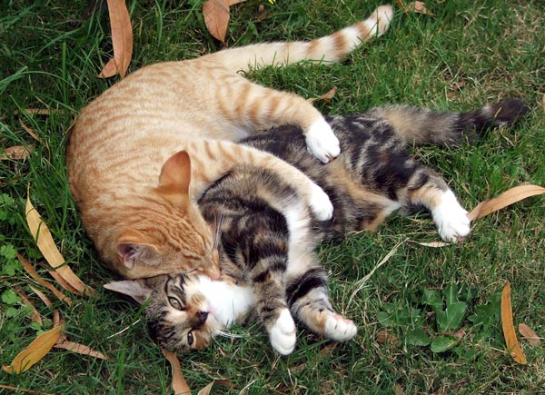 Funny and Cute Cats Gallery: May 2010