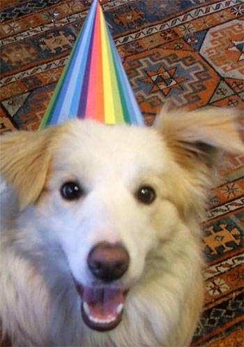 Rusty the puppy joins in the birthday celebrations.