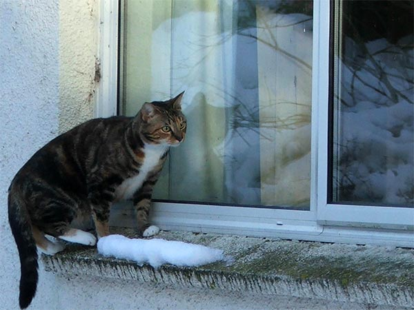 A brave cat facing a cold winter.