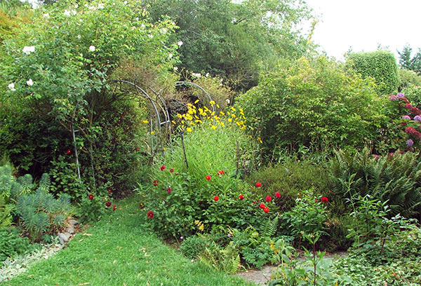 Yellow perennial daisies, and red dahlias give the March garden colour.