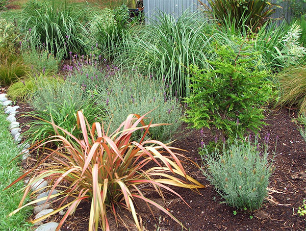 Toe Toe, Miscanthus, Calamagrostis and Carexes in my grasses garden.