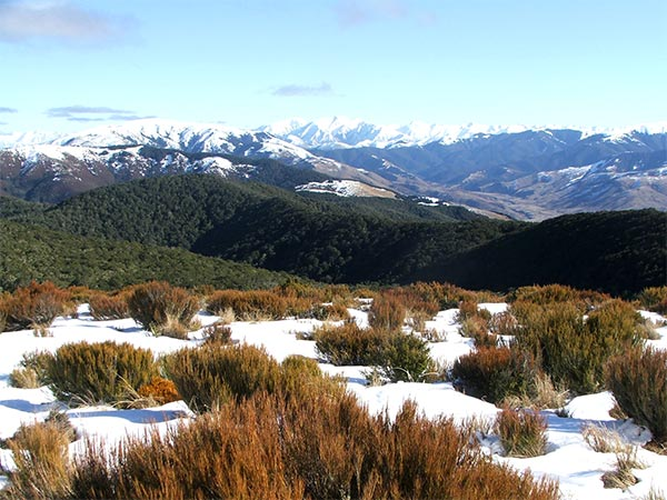 On the top of Mount Richardson, in the foothills of the Southern Alps.
