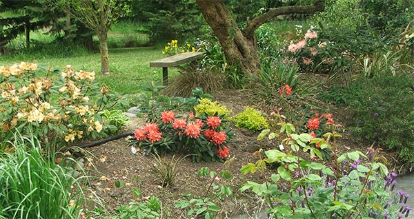 A wobbly garden seat is by the rhododendron garden.