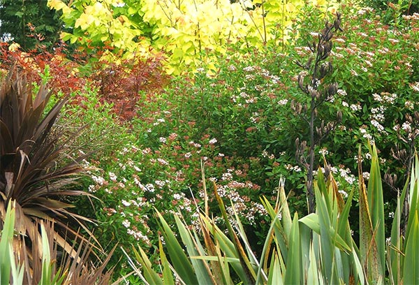 Colours and textures in Middle Garden.