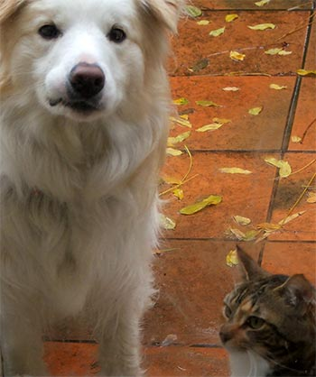 Rusty the dog and Tiger the cat outside in the winter rain.