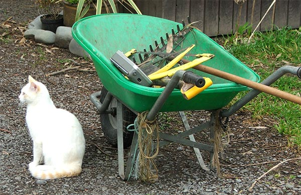 B-Puss loves to check out the bits and pieces in the wheelbarrow.