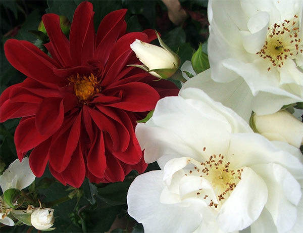 A lovely combination of flowers in late summer.