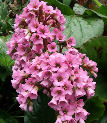 I love pink flowers.