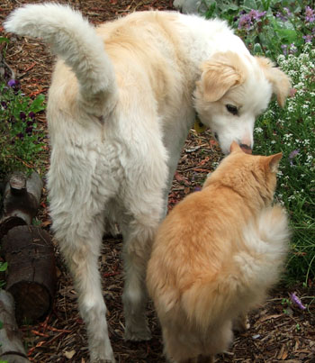 Fluff-Fluff and Rusty in the garden.