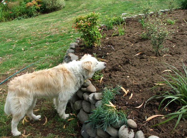 Rusty the dog has a nose for horse manure.
