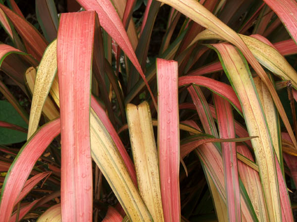 Such warm colours for autumn and winter in the garden.