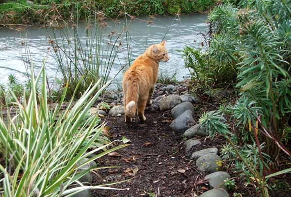This is the first path leading to the waterside Dog-Path Seat. The cat is Percy.