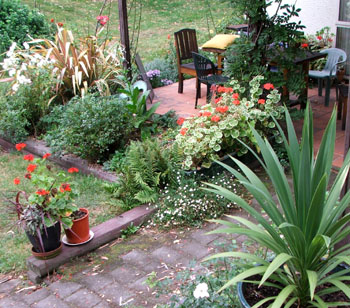 With pots of cordylines and red pelargoniums.