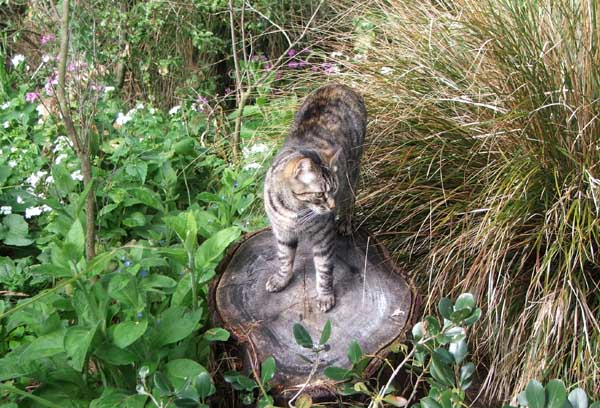 Histeria the cat in the Wattle Woods mess.