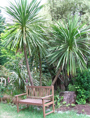 Bench underneath the Cordylines in Middle Garden.