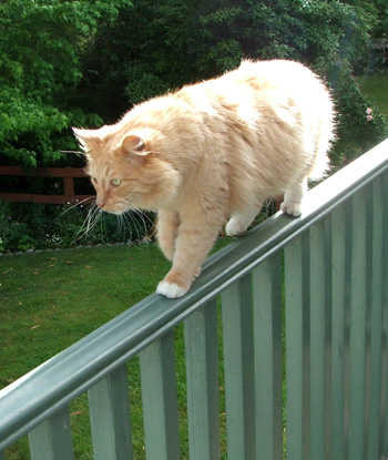 Fluff-Fluff is walking the upstairs balcony rail. eek!