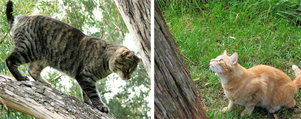 Histeria is up the tree, Percy is on the ground below...