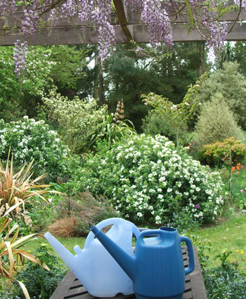Watering cans, Wisteria...