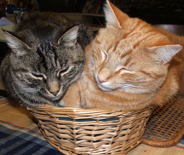 Silly things! Histeria and Percy are squashed into a small basket.