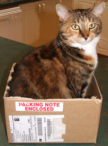 Tiger, with packing slip enclosed.