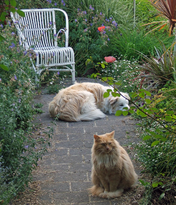 Fluff-Fluff the cat and Rusty the dog.