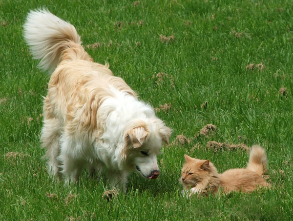 Fluff-Fluff the cat and Rusty the dog in the Frisbee Lawn.