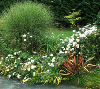 Floppy Shastas, a flax, and a Miscanthus grass.
